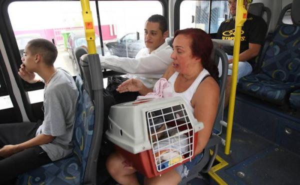 Lei foi aprovada e agora é permitido levar animais de estimação no transporte público