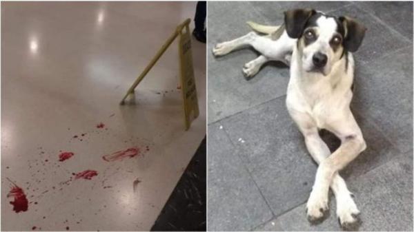Segurança da Carrefour é acusado de matar cachorro a pauladas e internautas ficam revoltados