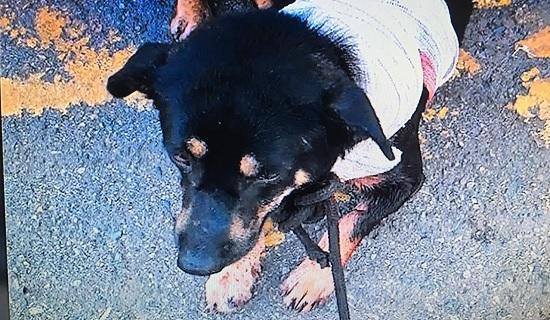 Ambulante é preso em flagrante após esfaquear pescoço de cachorro em Salvador