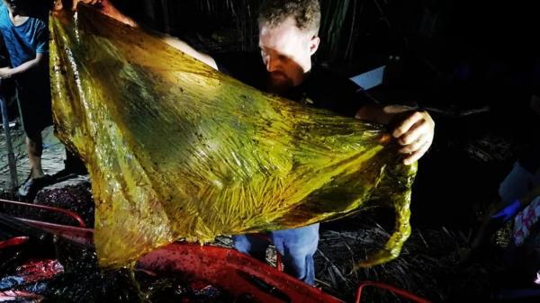 Baleia com 40 kg de plástico no estômago morre de fome nas Filipinas